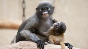 Desktop Wallpaper: Baby Monkey Holding ...