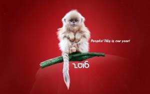 Desktop Wallpaper: Small White Monkey