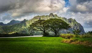 Desktop Wallpaper: Green Trees In A Fie...