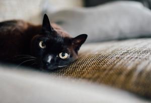 Desktop Wallpaper: Black Cat On Brown T...
