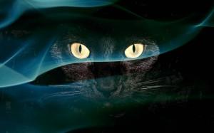 Desktop Wallpaper: Black Cat With Green...