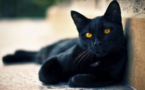 Desktop Wallpaper: Black Cat With Yello...