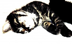 Desktop Wallpaper: Brown Tabby Cat Lyin...