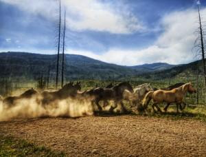 Desktop Wallpaper: Horses Herd