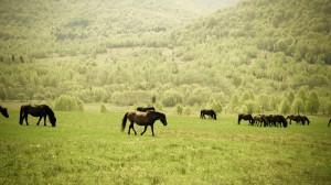 Horses On Green Meadow Near Green Trees During Daytime - скачать обои на рабочий стол