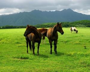 Desktop Wallpaper: 2 Brown Horse On Gre...
