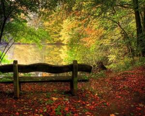 Desktop Wallpaper: Green Wooden Bench I...