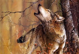 Desktop Wallpaper: White And Brown Wolf...