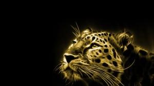 Desktop Wallpaper: Albino Tiger Photo