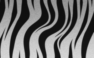 Desktop Wallpaper: White And Black Zebr...