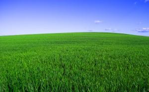 Desktop Wallpaper: Green Grass Field Be...