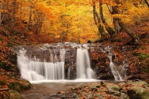 Desktop Wallpaper: Trees Beside River D...