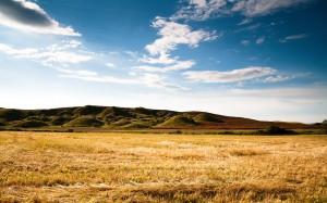 Desktop Wallpaper: Brown Grassfiel Duri...