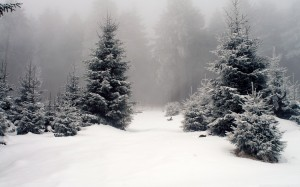 Desktop Wallpaper: Pine Trees On Snow C...