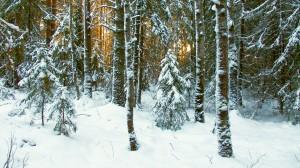 Desktop Wallpaper: Snow Covered Ground ...