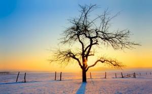 Desktop Wallpaper: Tree On White Snow U...