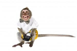 Desktop Wallpaper: Smiling Monkey Weari...