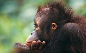 Desktop Wallpaper: Brown Monkey Outdoor...