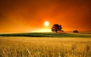 Desktop Wallpaper: Sun Over Tree In Gre...