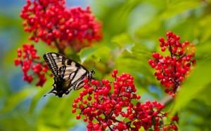 Desktop Wallpaper: Monarch Butterfly