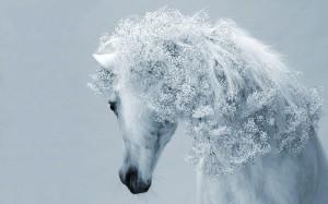 Desktop Wallpaper: White Horse In A Gra...