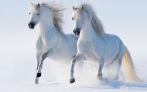 Desktop Wallpaper: 2 White Horses Runni...