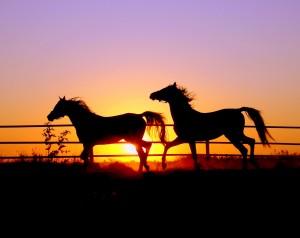 Desktop Wallpaper: Two Horses Running A...