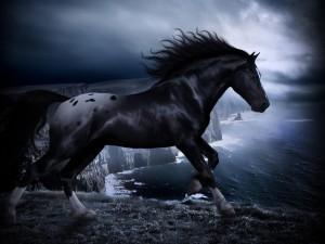 Desktop Wallpaper: Black Horse On Lakes...