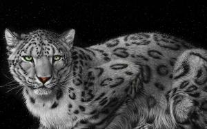 Desktop Wallpaper: Mountain Leopard