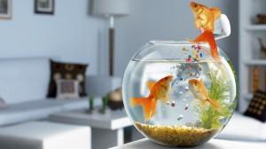 Desktop Wallpaper: Clear Glass Fish Bow...