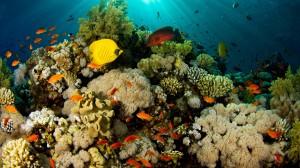 Desktop Wallpaper: Sea Fish Coral Reef