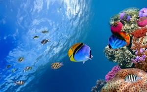 Desktop Wallpaper: Species Of Fishes Un...