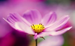 Desktop Wallpaper: Purple Blossoming Fl...