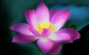 Desktop Wallpaper: Pink Flower With Yel...