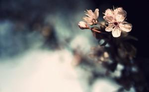 Pink Flowers - скачать обои на рабочий стол