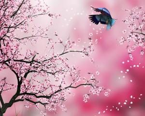 Desktop Wallpaper: Pink Tree And Blue A...