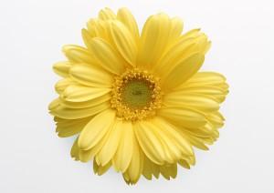 Desktop Wallpaper: Yellow Flower With W...