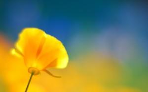 Desktop Wallpaper: Macro Shot Of Yellow...