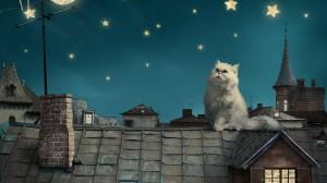 Desktop Wallpaper: White Persian Cat On...