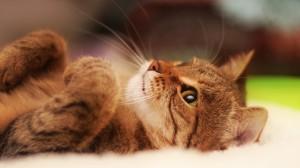 Kitten Lying On White Textile - скачать обои на рабочий стол
