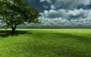 Desktop Wallpaper: Single Tree Over Gre...