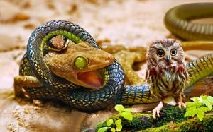 Desktop Wallpaper: Snake Next On Bird
