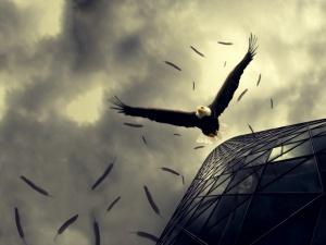 Desktop Wallpaper: Bald Eagle Flying Be...