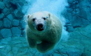 Desktop Wallpaper: Polar Bear Under Wat...