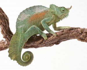 Green Gecko - скачать обои на рабочий стол