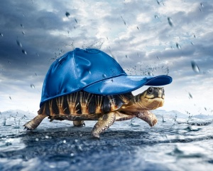 Brown Turtle With Blue Fitted Cap Under Gray Sky During Rainy Day - скачать обои на рабочий стол