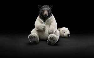 Desktop Wallpaper: Black Bear Wearing W...