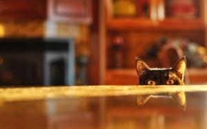 Desktop Wallpaper: Cat Peeking Beside T...