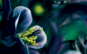 Desktop Wallpaper: Purple Flower With Y...