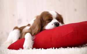 Desktop Wallpaper: Lazy Dog